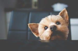 welcome welcomed cute dog