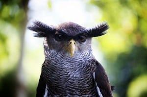 """Fowl swoop"" vs. ""Foul swoop"" vs. ""Fell swoop"" - owl"