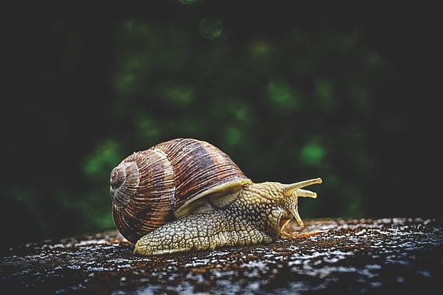 """Exasperate"" vs. ""Exacerbate"" snail"