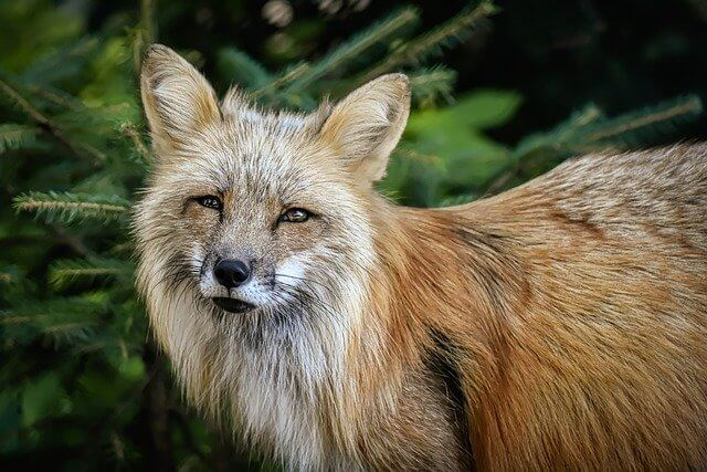 """Rue"" vs. ""Roux"" - Fox"